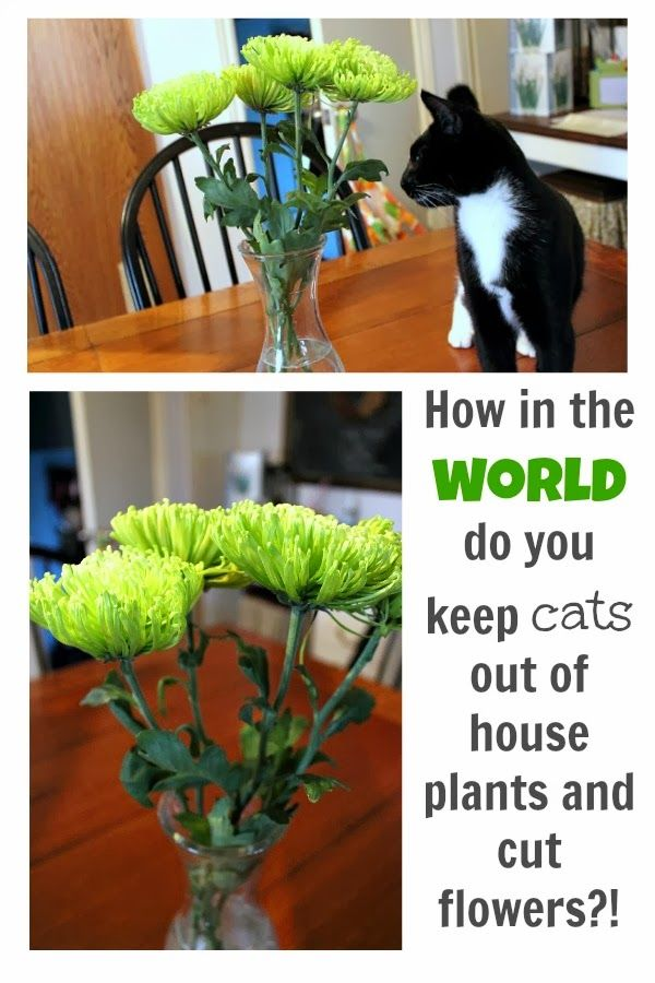 A Few Diffe Tips And Tricks For Keeping Cats Away From Precious House Plants Flowers