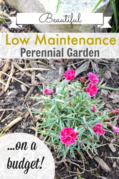 How To Get A Beautiful Low Maintenance Perennial Garden At Your House On Even